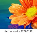 Close Up Of An Orange Flower...