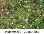 the flower  in the field summer ... | Shutterstock . vector #725803051