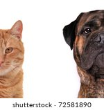 Stock photo cat and dog half of muzzle close up portraits isolated on white 72581890