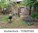 giant anteater in zoo | Shutterstock . vector #725829181