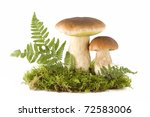 Two Fresh Porcini Mushrooms In...