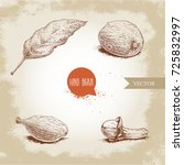 hand drawn sketch spices set....   Shutterstock .eps vector #725832997