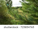 into the forest. nature... | Shutterstock . vector #725854765