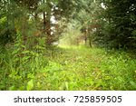 into the forest. nature... | Shutterstock . vector #725859505