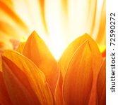 Beautiful Petals Of An Orange...