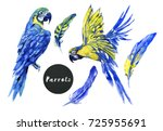 hand drawn parrots  flying... | Shutterstock . vector #725955691