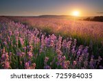 lavender beautiful meadow.... | Shutterstock . vector #725984035