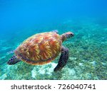 green sea turtle with brown...   Shutterstock . vector #726040741