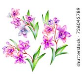 orchid branch with flowers ... | Shutterstock . vector #726043789
