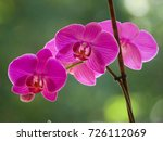purple orchids on a blurred...   Shutterstock . vector #726112069