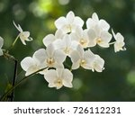 white orchids on a blurred...   Shutterstock . vector #726112231