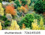 trees with red  yellow and... | Shutterstock . vector #726145105