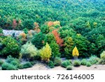 trees with red  yellow and... | Shutterstock . vector #726146005
