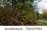 trees with red  yellow and... | Shutterstock . vector #726147031