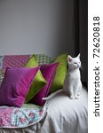Stock photo white young cat on a sofa with green and purple pillows 72620818
