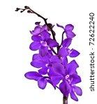 Purple Fresh Orchid Flower...