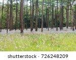 landscape of blooming blossom... | Shutterstock . vector #726248209