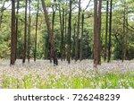 landscape of blooming blossom... | Shutterstock . vector #726248239