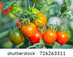 fresh tomato cluster close up... | Shutterstock . vector #726263311