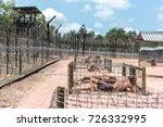 phu quoc island  vietnam  ... | Shutterstock . vector #726332995