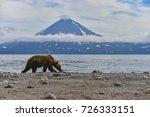 kamchatka brown bears  ursus... | Shutterstock . vector #726333151