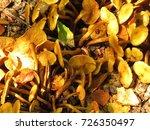 honey fungus  armillaria mellea  | Shutterstock . vector #726350497