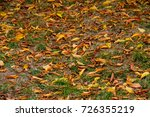 autumn . leaves on the ground... | Shutterstock . vector #726355219