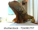 iguana walking | Shutterstock . vector #726381757