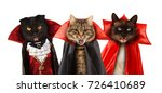 funny cats are celebrating a... | Shutterstock . vector #726410689