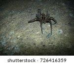 Small photo of Amazing Spider