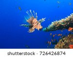 Colorful Lionfish On A Tropica...