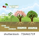 life cycle of tree with... | Shutterstock .eps vector #726461719