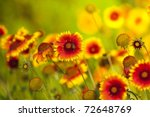Yellow And Red Flower In The...