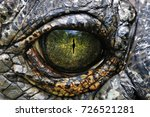 A Closeup Image Of A Gharials...