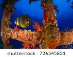 the sea life inside the wreck.... | Shutterstock . vector #726545821