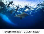spine dolphins coming to play... | Shutterstock . vector #726545839