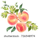 branch with peaches. watercolor ... | Shutterstock . vector #726548974