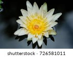 macro shot of a lotus flower .   Shutterstock . vector #726581011