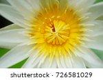 macro shot of a lotus flower .   Shutterstock . vector #726581029