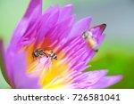 macro shot of a lotus flower .   Shutterstock . vector #726581041