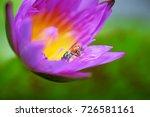 macro shot of a lotus flower .   Shutterstock . vector #726581161