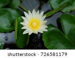 macro shot of a lotus flower .   Shutterstock . vector #726581179