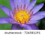 macro shot of a lotus flower .   Shutterstock . vector #726581191