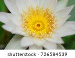 macro shot of lotus flower.   Shutterstock . vector #726584539