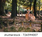 Japan's Famous Nara Deer. Sika...