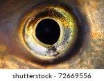 Fish Eye Close Up.