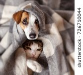 Stock photo dog and cat under a plaid pet warms under a blanket in cold autumn weather 726710044
