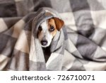 Stock photo dog under a plaid pet warms under a blanket in cold autumn weather 726710071
