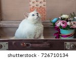 kitten of scottish straight... | Shutterstock . vector #726710134