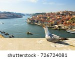 Seagull Screaming In Porto...